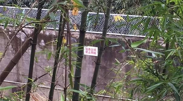 宁波雅戈尔动物园老虎袭击游客事件特别报道